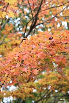 autumn101