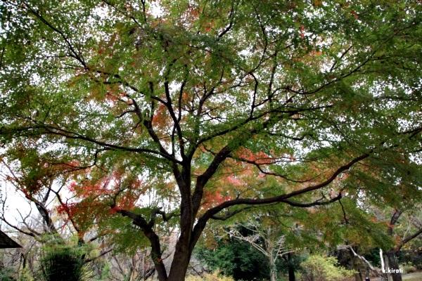 autumn131.JPG